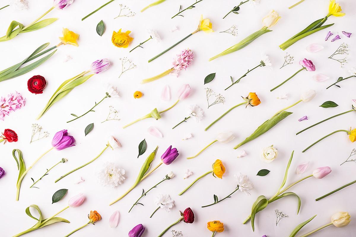 La couleur d'une fleur est une indication de sa portée vibratoire